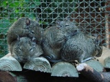 Degu World.com's first blog entry!